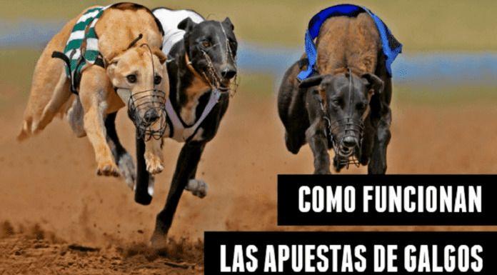 como funcionan las apuestas de galgos en-España en carreras de galgos mundiales